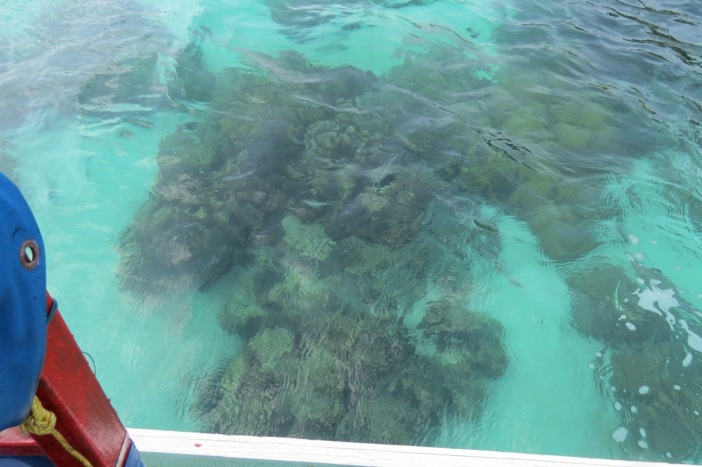 Clear water shows reef even without a mask!