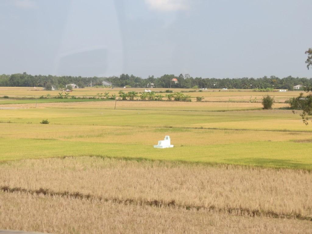 Gravestones of Ancestors in Family Rice Fields